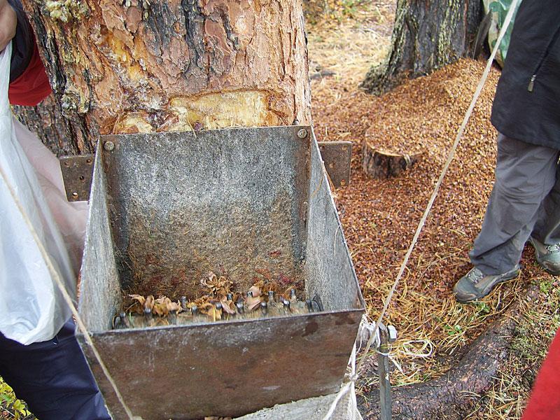 Как сделать сито для кедрового ореха 953