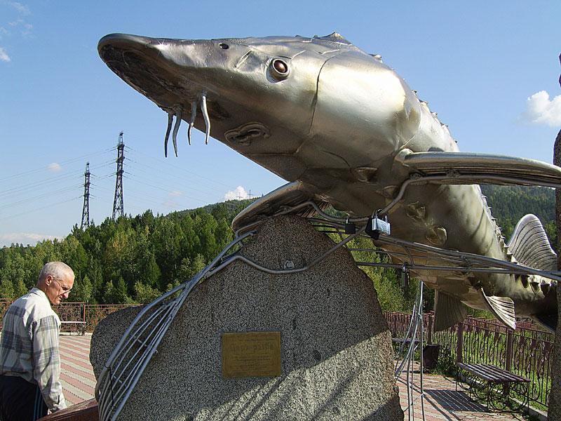 фото овсянка рыба